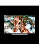 "Televisor Toshiba 65"" UHD 65U6763DG"